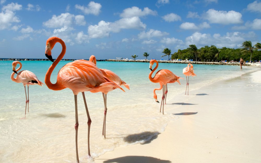 aruba-beach-FLAMINGO0617.jpg