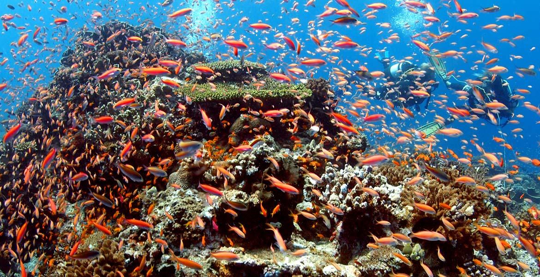 dIVING IN pEMBA Photo scuba fish snorkelling africa tanzania CB.jpg