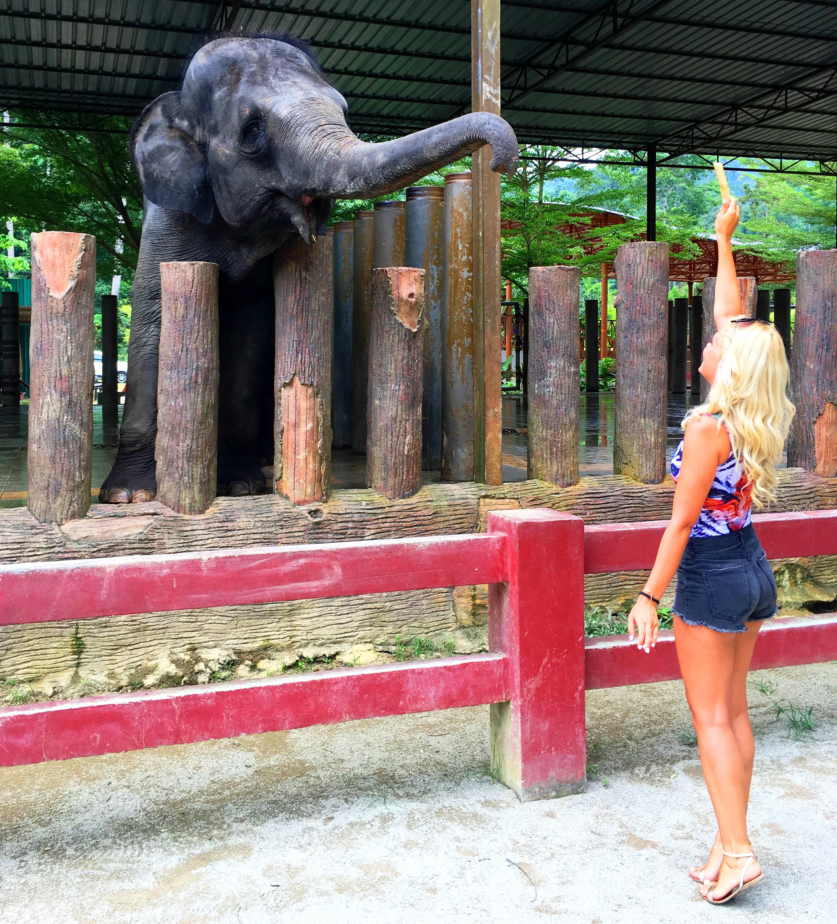 5 - malaysia-elephants-5