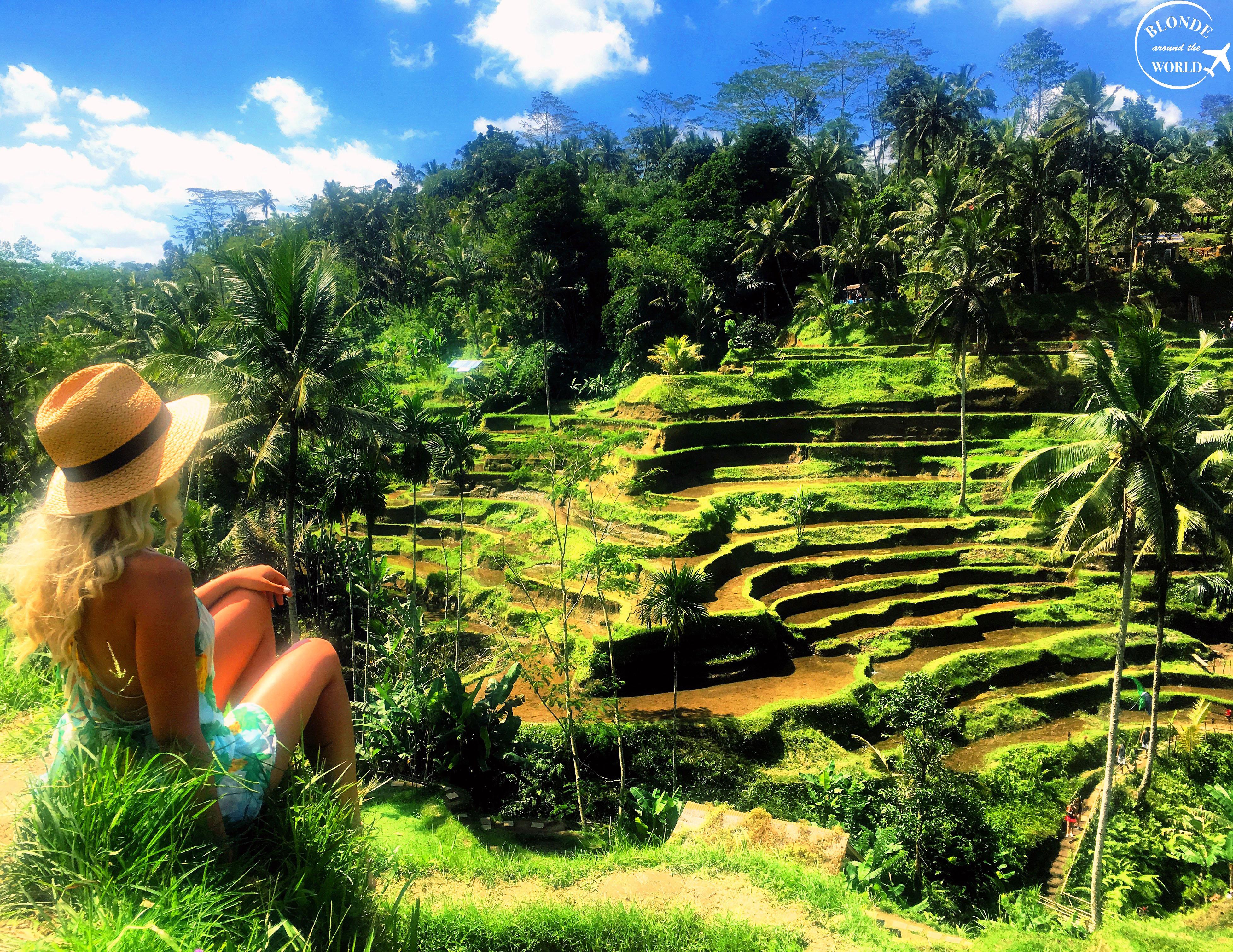 tegallalang-rice